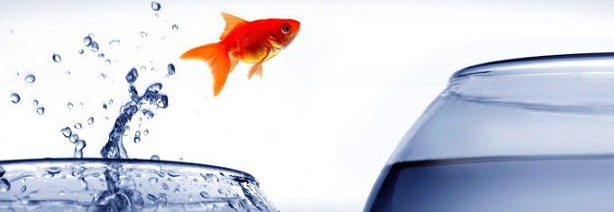 fish5 681x235